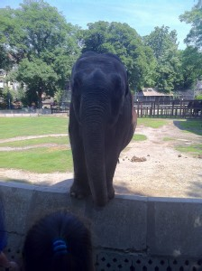 Bildiğin fil işte